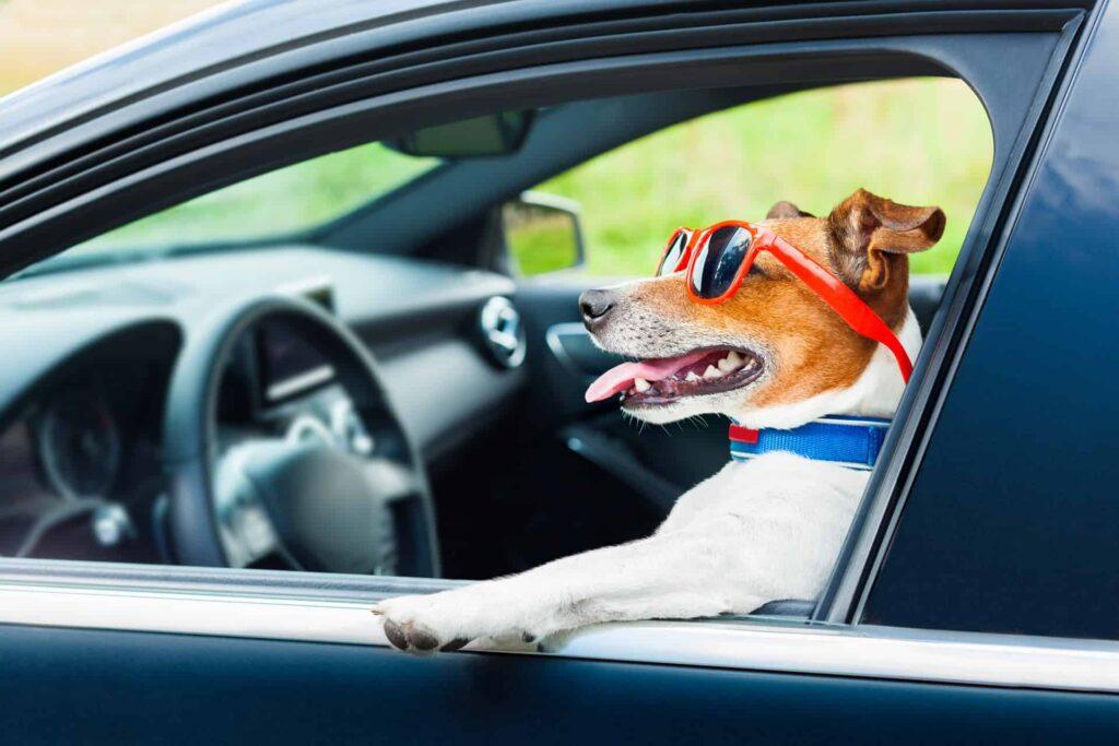 Собаки в автомобилях
